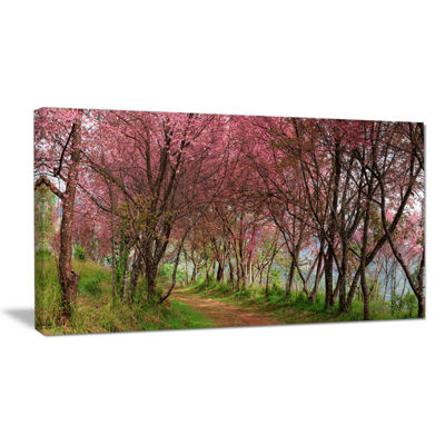 Designart Sakura Pink Flowers In Thailand Canvas Art
