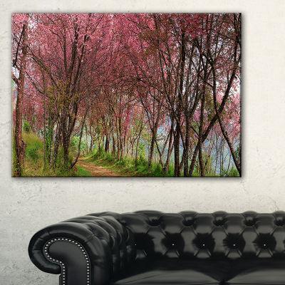 Designart Sakura Pink Flowers In Thailand Canvas Art