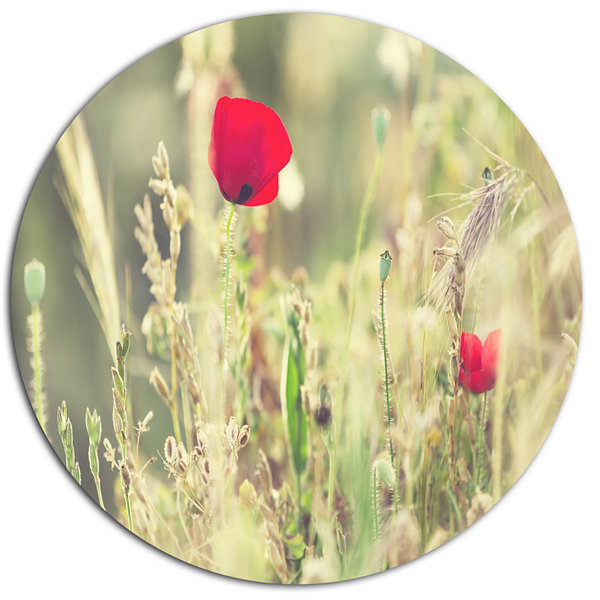 Design Art Meadow with Wild Poppy Flowers Large Flower Oversized Circle Metal Artwork