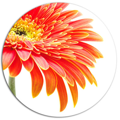 Design Art Orange Gerbera on White Background Floral Oversized Circle Metal Artwork
