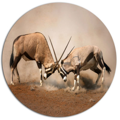 Designart Gemsbok Antelopes Fighting Ultra VibrantAfrican Metal Circle Wall Art Print