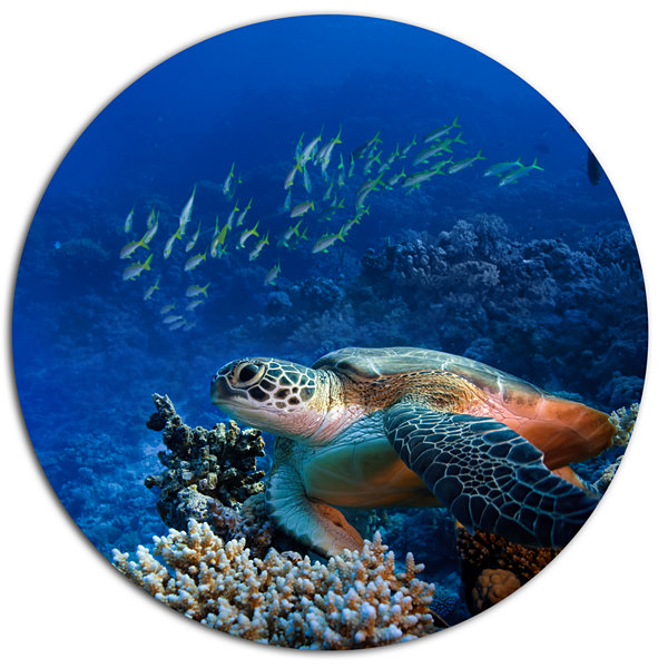 Designart Large Sea Turtle underwater Ultra Vibrant Abstract Metal Circle Wall Art