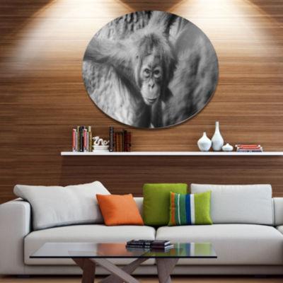 Designart Young Orangutan Black Ultra Vibrant Abstract Metal Circle Wall Art