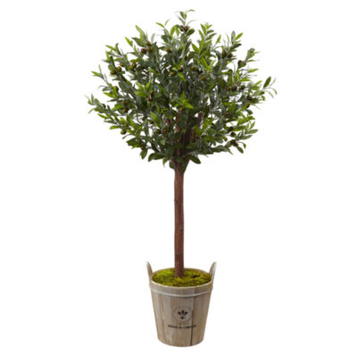 4.5' Olive Topiary