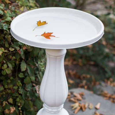 "Bloem Promo Bird Bath with Pedestal - 25"" x 17"""