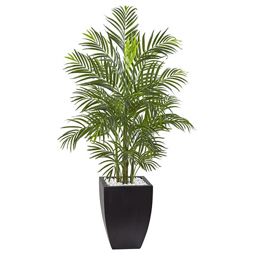 4.5' Areca Palm Tree