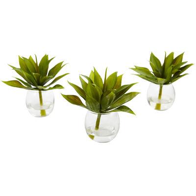"""5.75"""" Mini Agave Succulent Trio"""