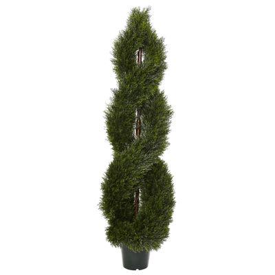 5' Pondy Cypress