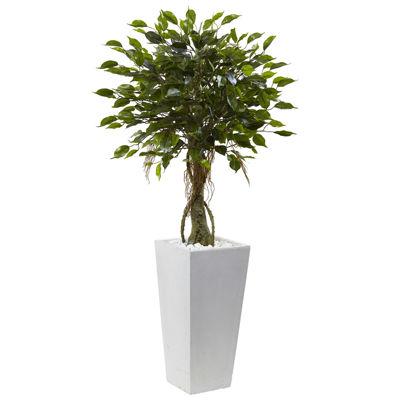 "52"" Ficus Tree"