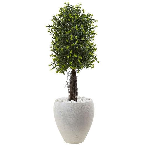 "40"" Ixora Topiary"
