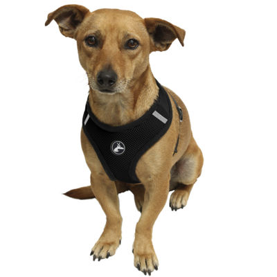 Paws & Pals Pet Control Harness for Dog & Cat