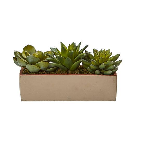 """5"""" Mixed Succulent Pot"""
