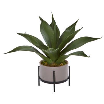 14 Agave Succulent in Decorative Planter