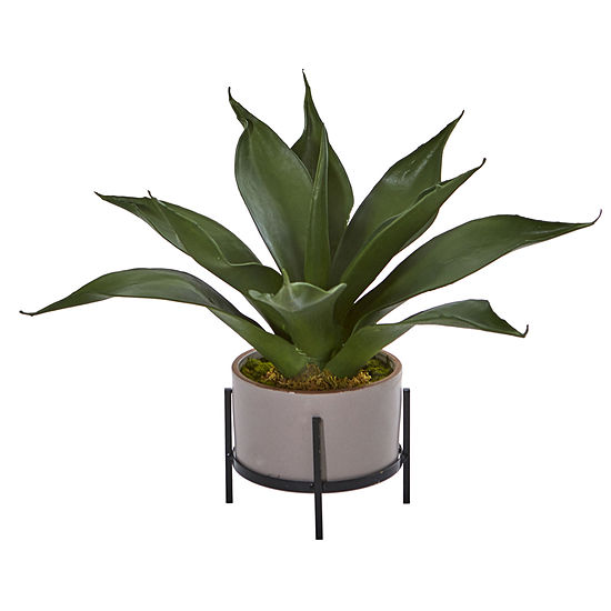 14 Agave Succulent In Decorative Planter