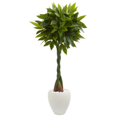 5' Money Artificial Tree in White Oval Planter (Real Touch