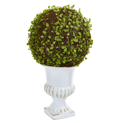 18 Mohlenbechia Ball Topiary in White Urn