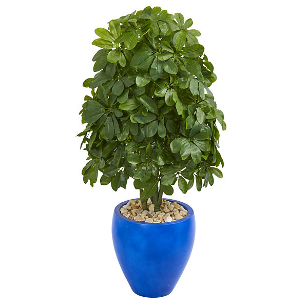 3.5' Schefflera Artificial Plant in Blue Oval Ceramic (Real Touch)