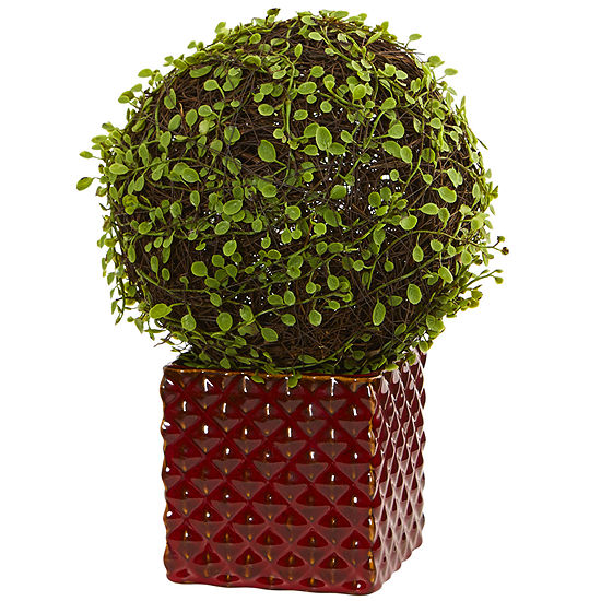 Mohlenbechia Ball Artificial Plant in Red Ceramic Cube