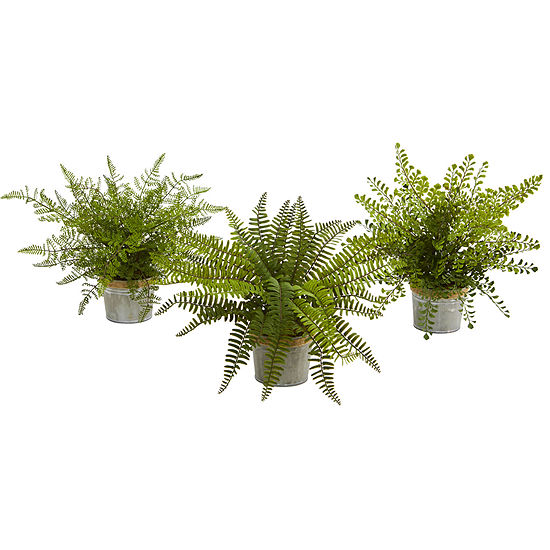 """14"""" Assorted Ferns with Planter Artificial Plant; Set of 3"""