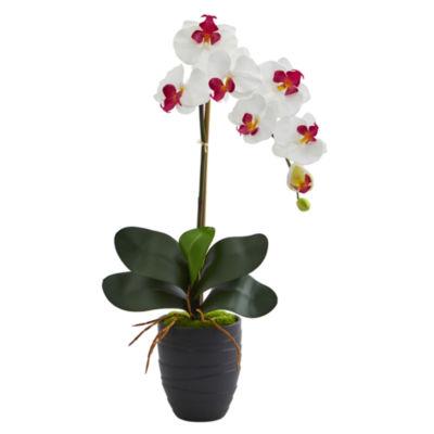 Phalaenopsis Orchid Artificial Arrangement in Ceramic Black Vase