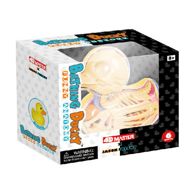 4D Master Funny Anatomy - Bathing Ducky Model
