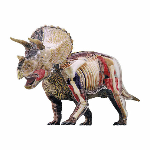 4D Master 4D Vision Triceratops Anatomy Model