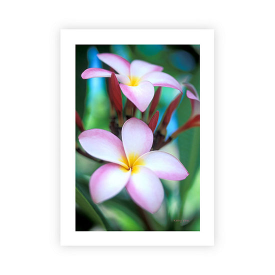 Brushstone Maui Plumeria Canvas Wall Art