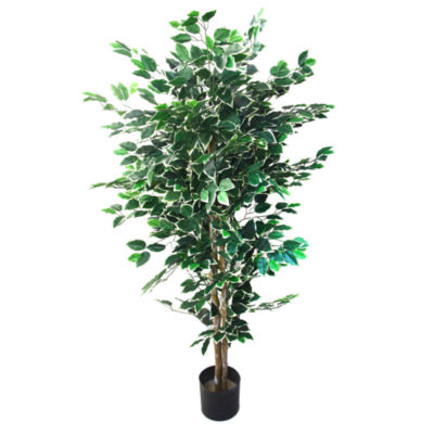 5' Potted Ficus Tree
