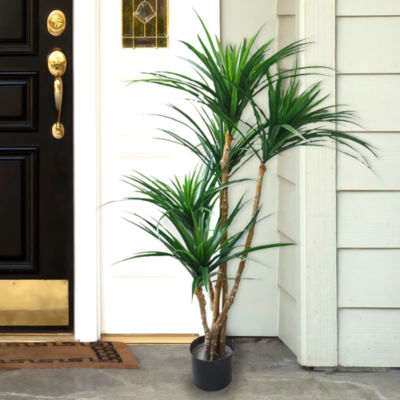 4' Potted Tropical Yucana Tree