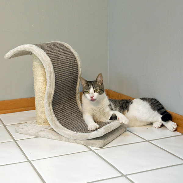 Iconic Pet Scratch and Slide Wave Cat Scratcher