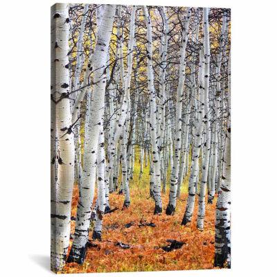 Icanvas Autumn In Aspen Canvas Art
