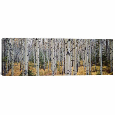 Icanvas Aspen Trees In A Forestalberta; Canada Canvas Art