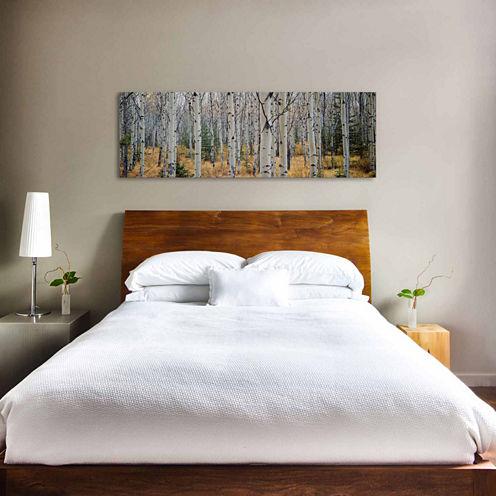 Icanvas Aspen Trees In A Forestalberta; Canada Canvas Art