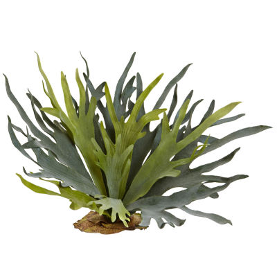 "2-pc. 21"" Staghorn Fern"