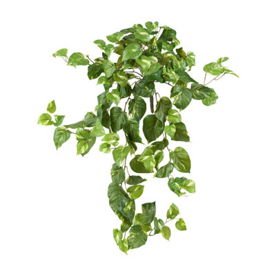 "3-pc. 40"" Pothos Hanging Bush"