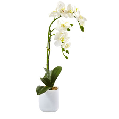 Phalaenopsis In Frosted Glass Floral Arrangement