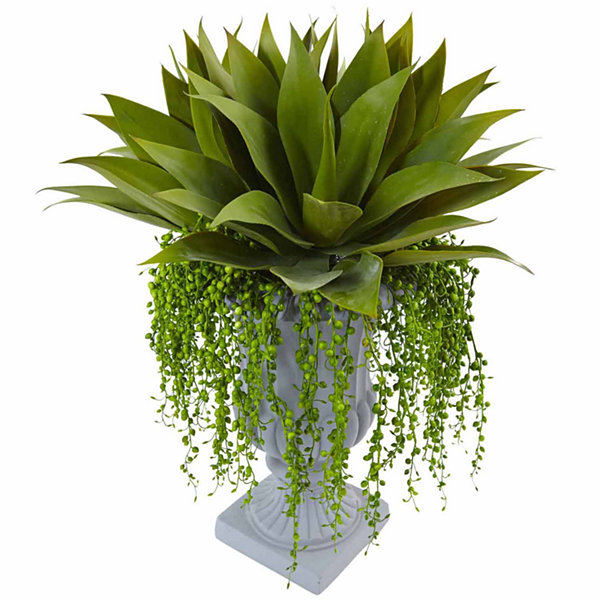 Agave And Senecio Succulent Arrangement