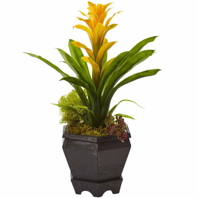 Bromeliad In Black Hexagon Planter