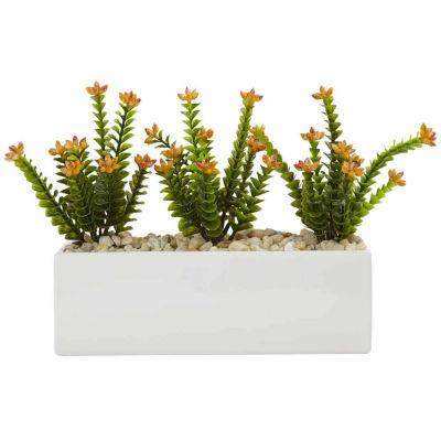 Flowering Sedum In Rectangular Planter