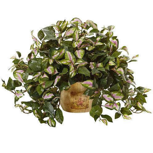 Hoya In Wooden Pot