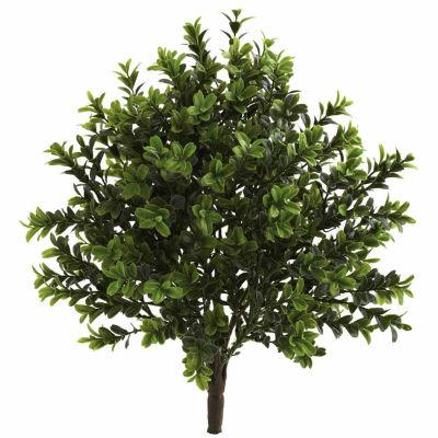 6-pc. Sweet Grass Bush