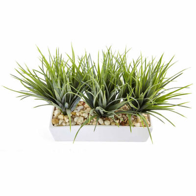 Vanilla Grass In Rectangular Planter