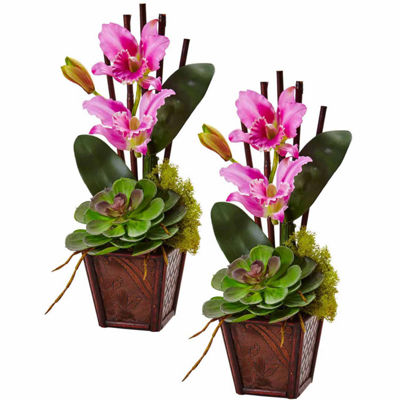Cattleya Orchid And Succulent Arrangement 2-pc. Floral Arrangement