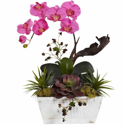 Orchid And Succulent Garden With White Wash Planter Floral Arrangement