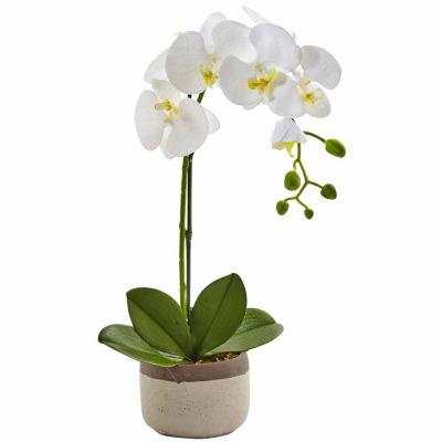 Phalaenopsis Orchid In Ceramic Pot Floral Arrangement