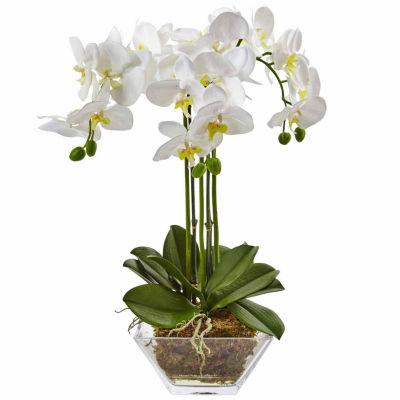 Triple Phalaenopsis Orchid In Glass Vase Floral Arrangement