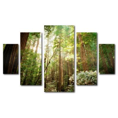 Muir Woods 5-Panel Canvas Wall Art Set