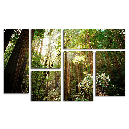 Muir Woods 6-Panel Canvas Wall Art Set - JCPenney