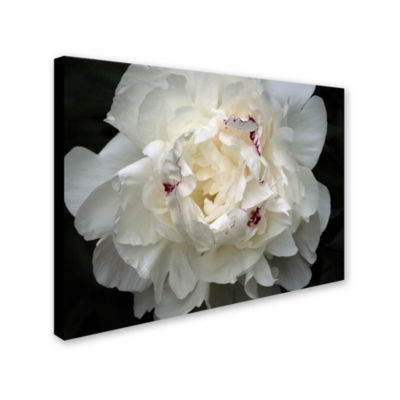 Perfect Peony Canvas Wall Art