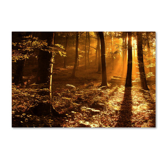 Morning Light Canvas Wall Art